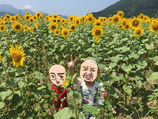 小浜市加茂 ひまわり畑2