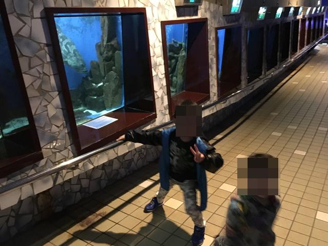 越前松島水族館3