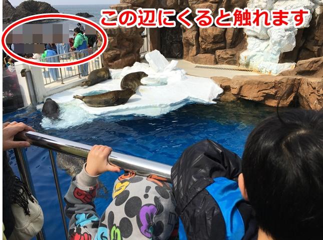 松島水族館5