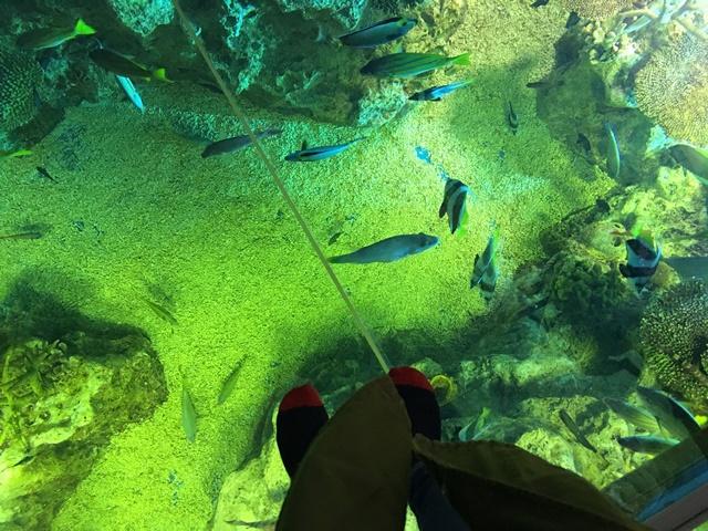 越前松島水族館8